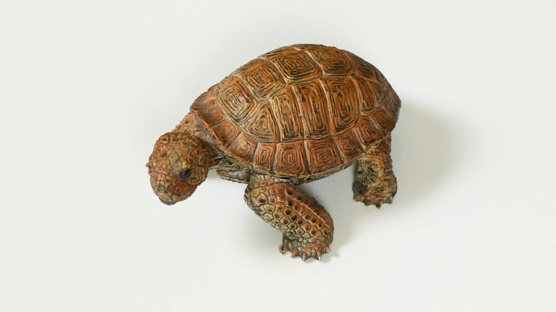 turtle-video.png